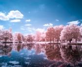 Фотографија во инфрацрвен спектар
