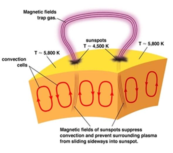 Претстава за механизмот на сончевите пеги