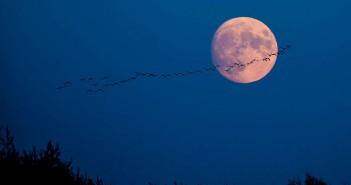 Месечината можеби ги поттикнува најсилните земјотреси на Земјата