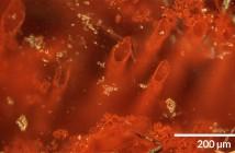 Најстарите микрофосили покажуваат дека животот на Земјата се развивал и пред 4 милијарди години