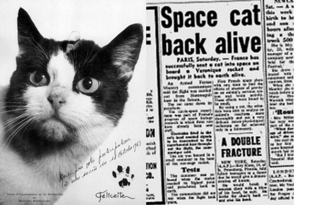 Првата мачка во вселената конечно ќе го добие признанието кое го заслужува